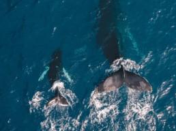 Big and little whale - comparison