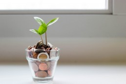 Stock image of coins and a growing plant to represent cost savings